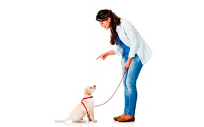 Picture girl, smile, dog, jeans, makeup, hairstyle, puppy, white background, leash, shirt, brown hair, gesture, Retriever