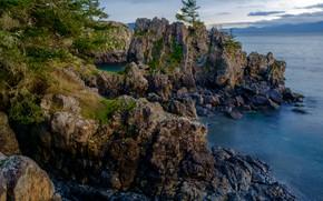 Picture sea, the sky, clouds, trees, stones, rocks, coast, the evening, horizon, Canada, East Sooke Park