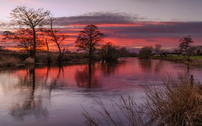 Picture trees, clouds, river, the evening, glow