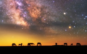 Wallpaper silhouettes, stars, horse, the sky, the milky way, night, the evening