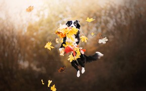 Wallpaper dog, autumn, leaves