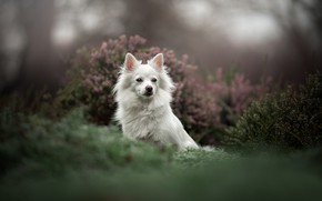 Picture dog, bokeh, Heather