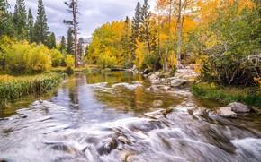 Picture autumn, river, stream