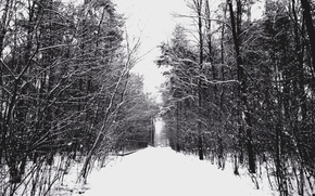 Picture Winter, Trees, Snow, Frost, Track, Winter, Frost, Snow, Trees, Path