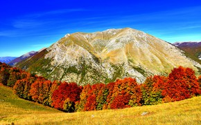 Picture autumn, landscape, nature, mountain, yellow trees
