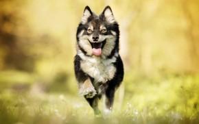 Wallpaper joy, dog, running, walk, bokeh