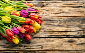 Wallpaper spring, beautiful, fresh, colorful, wood, tulips, tulips, bright, bouquet, spring, flowers, flowers