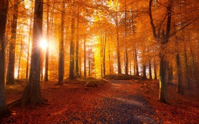 Picture road, falling leaves, the rays of the sun, autumn Park