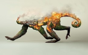 Picture forest, fire, collage, monkey