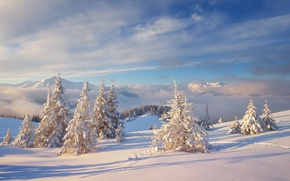 Picture cold, winter, forest, the sky, clouds, snow, landscape, mountains, nature, hills, ate, frost, the snow, …