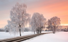 Picture winter, frost, road, trees, frost