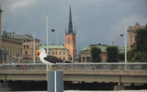 Picture bridge, tower, Seagull, lights, Stockholm, Sweden, Sweden, spire, Stockholm, Riddarholmskyrkan, Riddarholm Church, scumbria