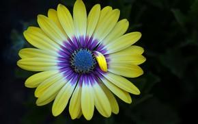 Wallpaper flower, nature, petals