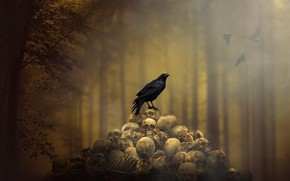 Picture background, skull, Raven