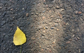 Picture autumn, asphalt, yellow, sheet, minimalism