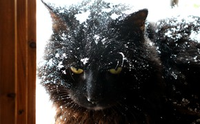 Picture cat, look, snow
