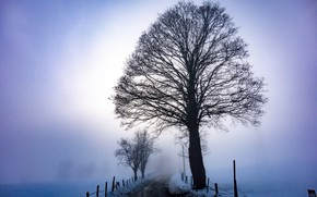 Picture winter, road, fog, tree, morning