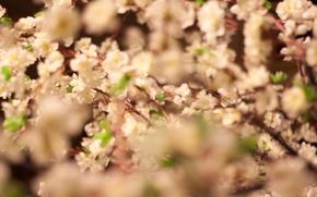 Picture flowers, cherry, Japan, spring, Sakura, flowering, insta:kportfolio