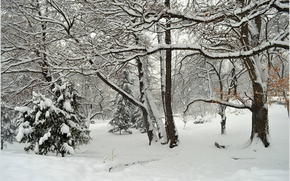 Picture Winter, Trees, Snow, Park, Frost, Frost, Park, Snow, Trees, Wintet