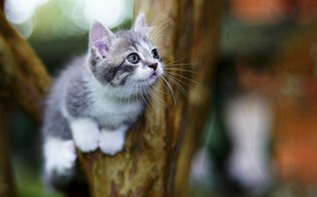 Picture kitty, background, cute
