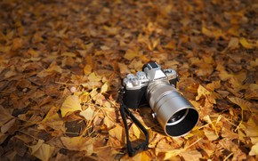 Wallpaper autumn, the camera, Olympus OM-D, leaves