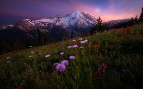 Picture Sky, Landscape, Sun, Rainier, Mount, Wildflowers