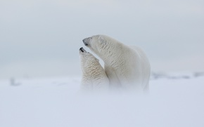 Picture winter, white, the sky, snow, love, nature, fog, background, mood, bear, family, bears, haze, white, …