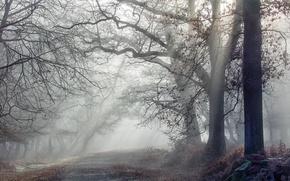 Wallpaper forest, morning, road, fog