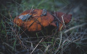Picture cold, autumn, forest, mushrooms