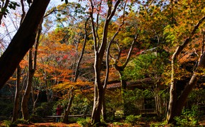 Wallpaper Park, the sun, trees, Kyoto, autumn, Japan, Sagano
