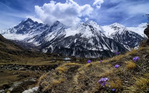 Wallpaper spring, mountains, flowers