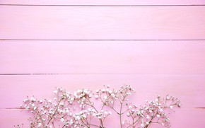 Picture flowers, background, pink, white, pink, flowers, background, wooden, spring, tender, floral
