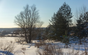 Picture winter, snow, trees, sunset, nature, frost, Russia, Sunny, cold, Mozhaysk, backlight
