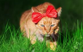 Wallpaper cat, cat, bow, face