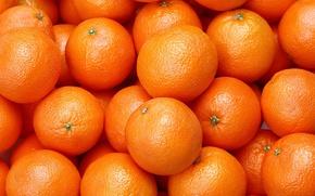Picture Orange, Food, Citrus