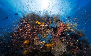Picture sea, light, fish, the ocean, underwater world, under water, reef