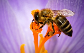Wallpaper nature, flower, bee, insect