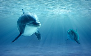 Picture ocean, realism, dolphins