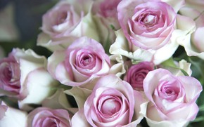 Picture tenderness, roses, buds