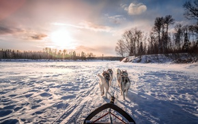 Picture winter, dogs, morning, wagon