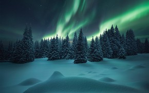 Picture forest, Northern lights, winter, snow, the snow, ate