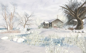 Picture winter, snow, trees, landscape, house