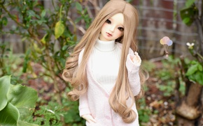 Picture hair, doll, girl