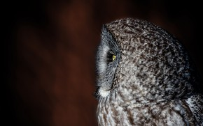 Picture background, owl, profile