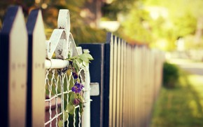 Picture summer, flowers, the city, street, the fence, wicket, blur, bokeh