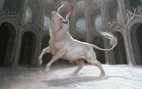Picture art, arena, bull, moonlight, Maria Zolotukhin To
