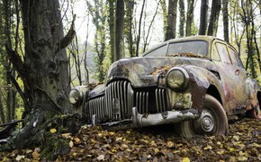Picture machine, forest, nature, scrap