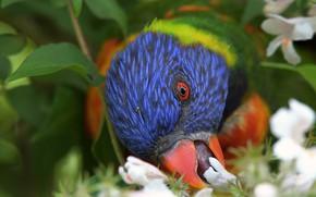 Picture flowers, tree, bird, beak, parrot