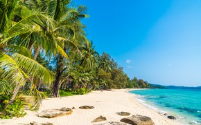 Picture sand, sea, summer, palm trees, Beach, Tropics