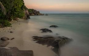 Picture sea, beach, tropics, palm trees
